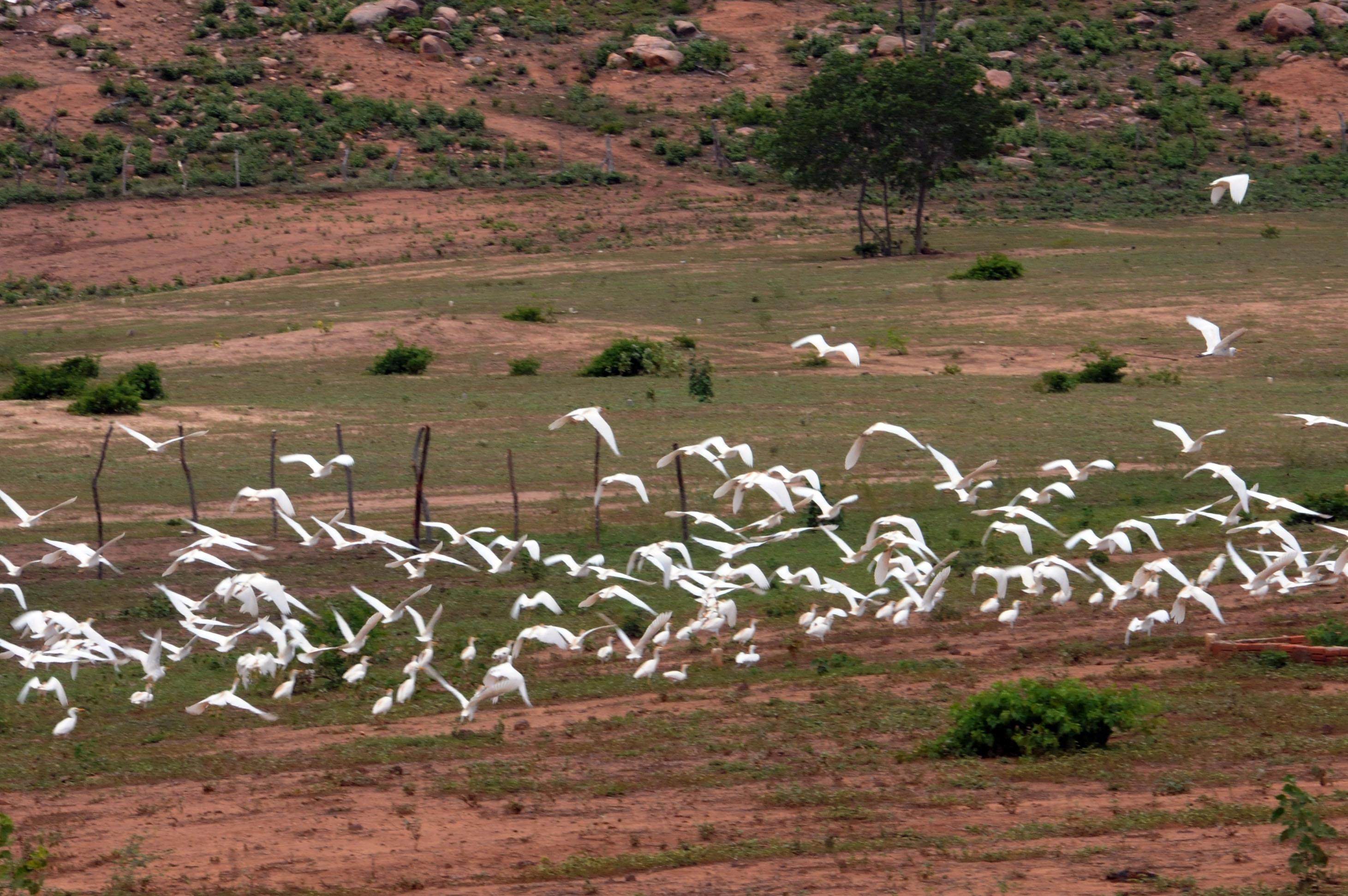 MMA apoia projeto de adaptação à seca