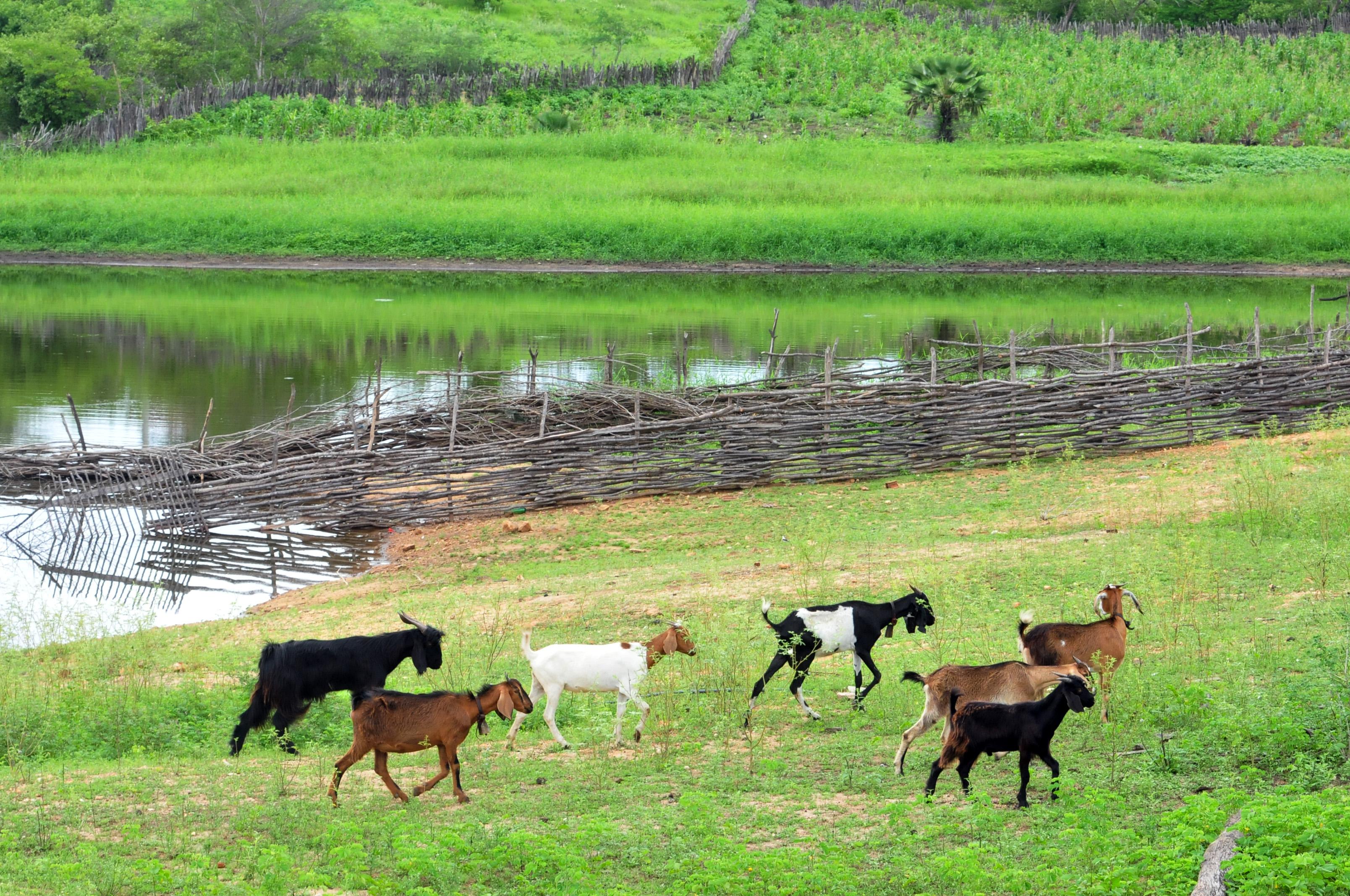 Prêmio reconhece projetos de combate à seca