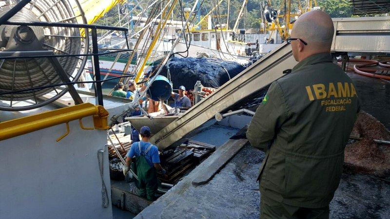 Ibama apreende 50 toneladas de tainha em SC