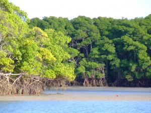 Edital financia projetos na Amazônia
