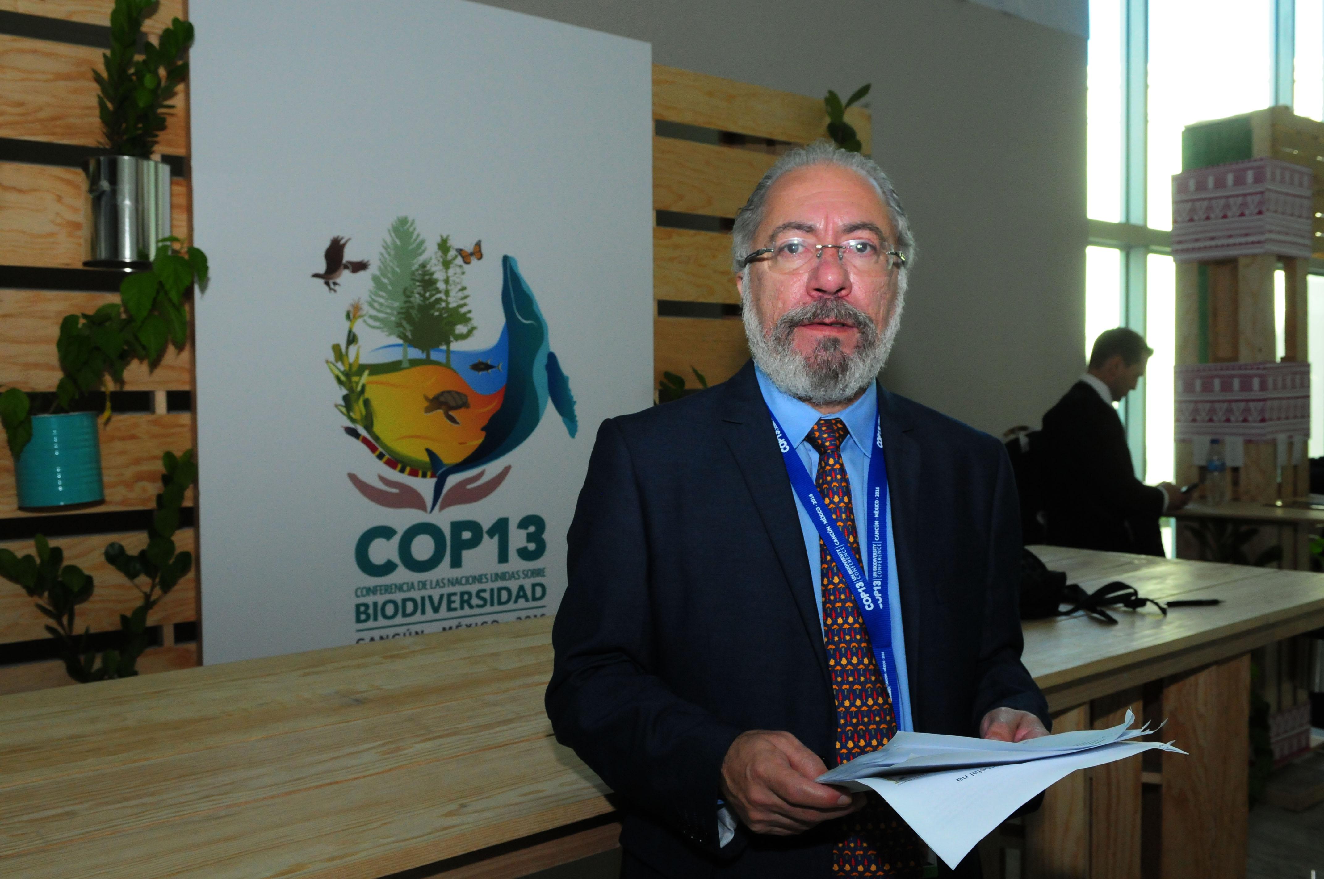 País combate exploração ilegal de madeira