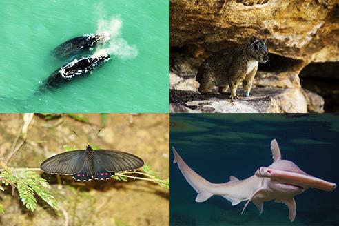 Brasil lança Livro Vermelho da Fauna na COP13