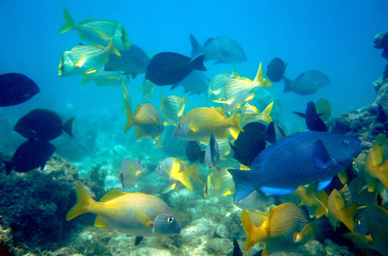 Países reforçam ações para proteger corais