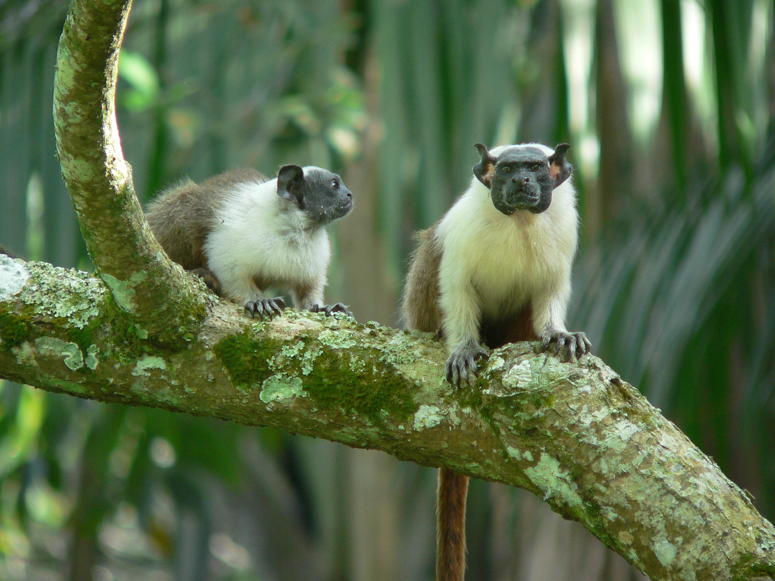 Reunião discute conservação de primatas