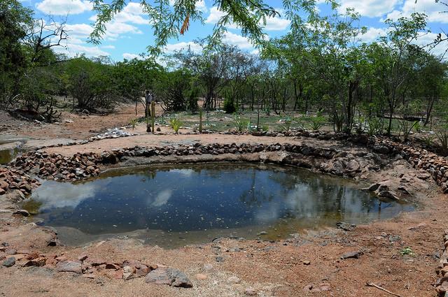 MMA recupera áreas degradadas no Piauí