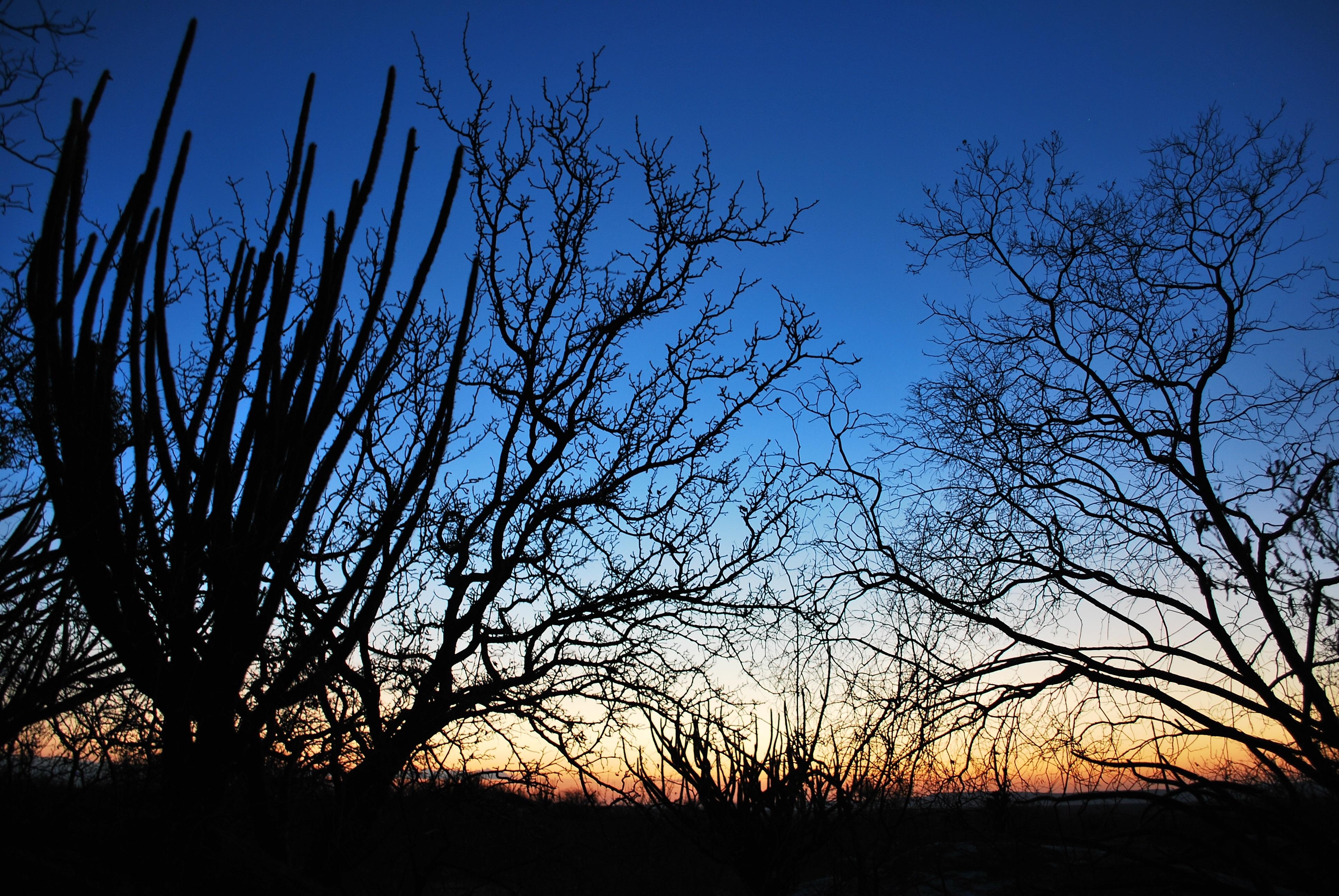 GEF-Terrestre atuará em três biomas